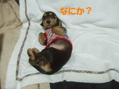 blogjikkanico03.jpg