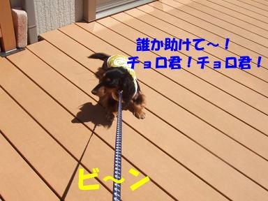blogkawa09.jpg
