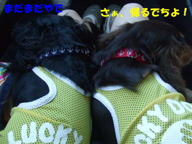 blogkawa12.jpg