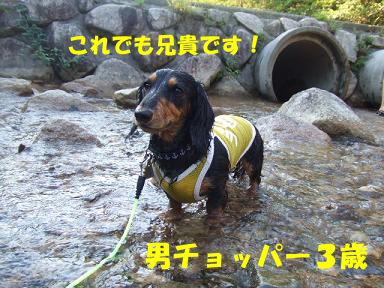 blogkawa50.jpg