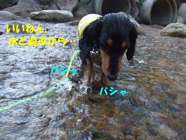 blogkawa51.jpg