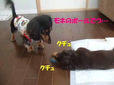 blogmonenico01.jpg