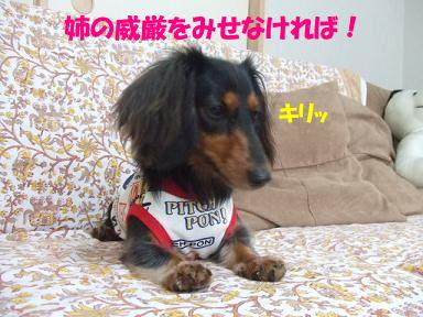 blogmonenico03.jpg