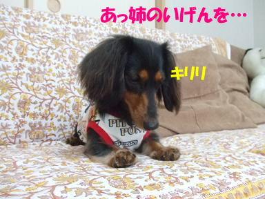 blogmonenico04.jpg