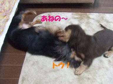 blogmonenico05.jpg