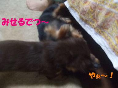 blogmonenico08.jpg