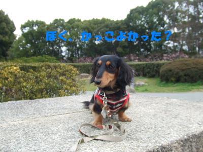blognag11.jpg