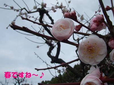 blognag17.jpg