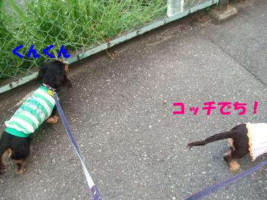 blognakayosi04.jpg