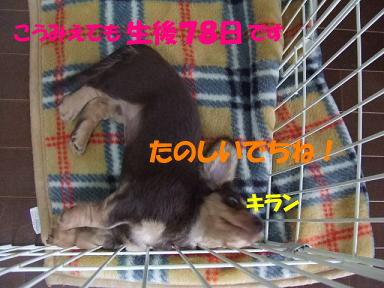 blogniconemu02.jpg