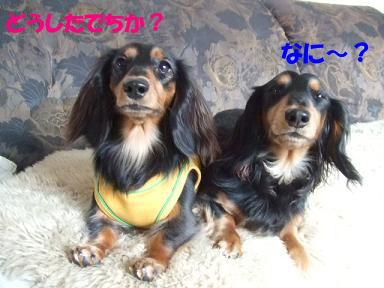 blogniconico01.jpg