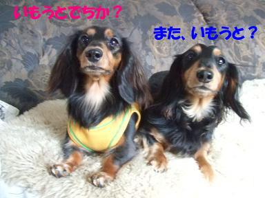 blogniconico02.jpg