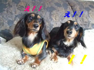 blogniconico03.jpg