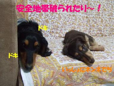 blognigeba03.jpg