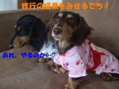 blogninken02.jpg
