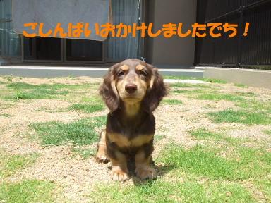 blogniwa06.jpg