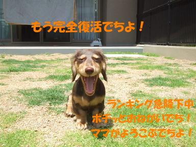 blogniwa07.jpg
