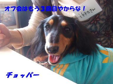 blogoffh06.jpg