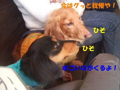 blogoffh13.jpg