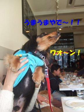 blogoffh44.jpg