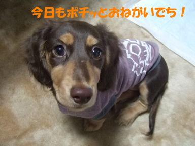 blogosoro09.jpg