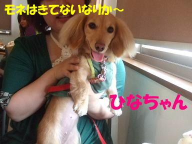 blogpdturumi04.jpg