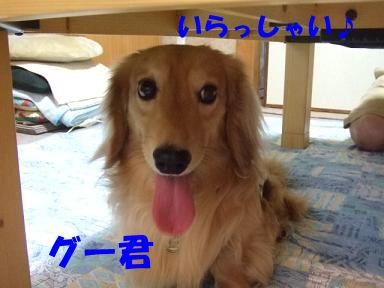 blogpl04.jpg