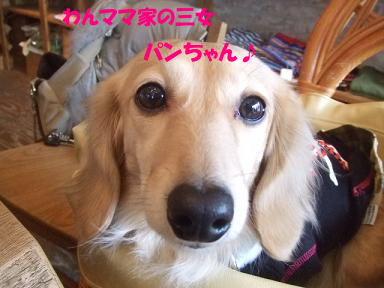 blogputi03.jpg