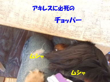 blogputi05.jpg