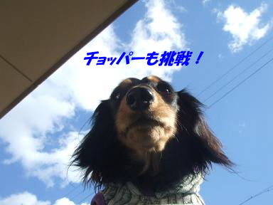 blogputi49.jpg