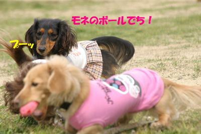 blogryokuti14.jpg