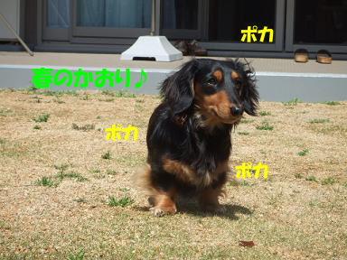 blogsakura01.jpg