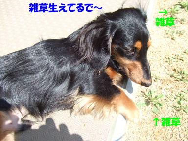 blogsakura02.jpg