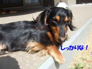 blogsakura03.jpg