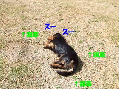 blogsakura05.jpg