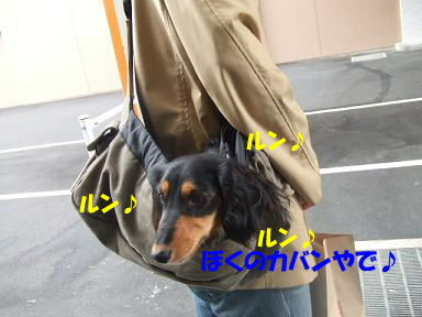 blogsennta04.jpg