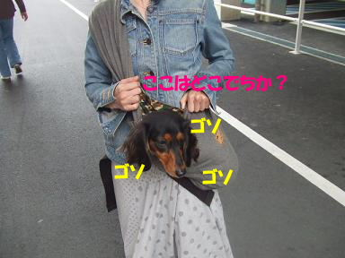 blogsennta05.jpg