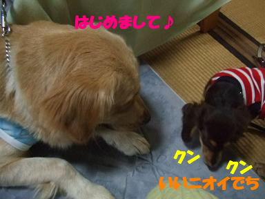 blogsibata08.jpg