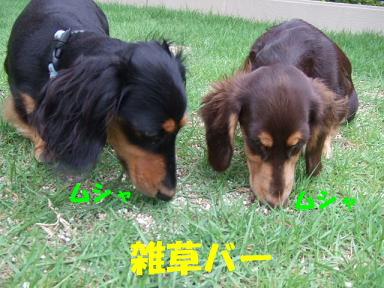 blogsituke04.jpg