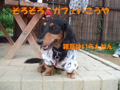 blogtanabata11.jpg