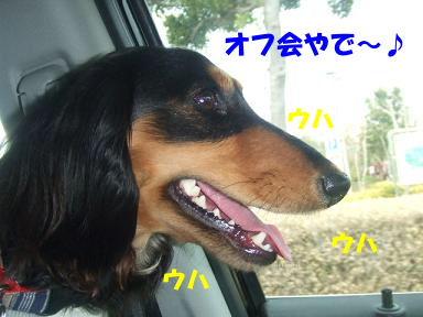 blogturumi01.jpg