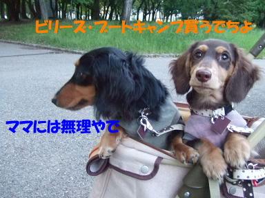 bloguge09.jpg