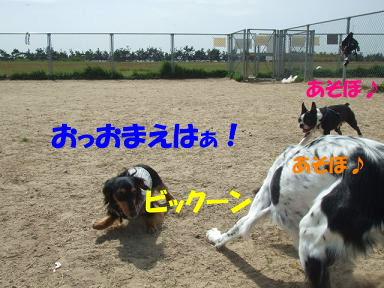 blogumihure03.jpg
