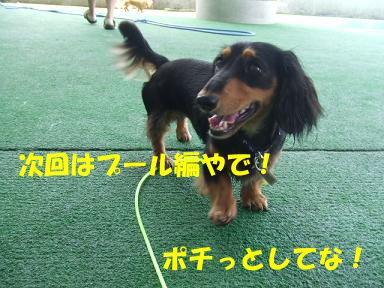 blogwanpara06.jpg