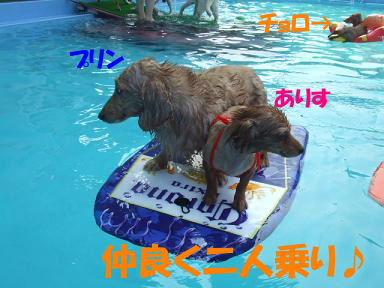 blogwanpara31.jpg