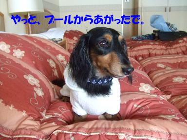blogwanpara33.jpg