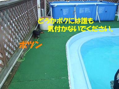 blogwanpara49.jpg
