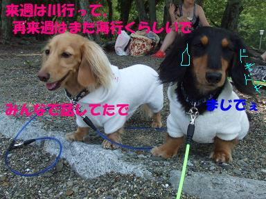 blogwanpara69.jpg
