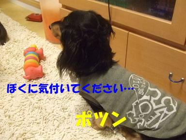 blogwanwan11.jpg