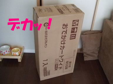 blogyasumi01.jpg